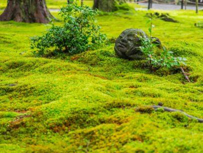 苔の種類を徹底解説!品種別の苔の生態や育て方について
