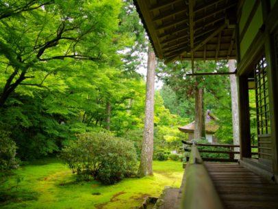 苔庭とは?苔庭の事例や手入れの方法をわかりやすく解説