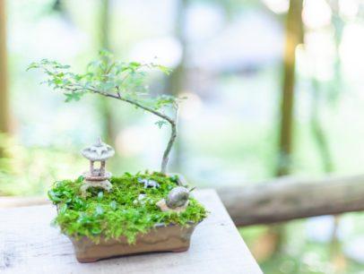 初心者から始める苔盆栽の育て方について