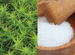 苔と塩の相性は?海の近くに住む方は必見!