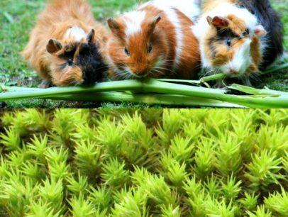 苔がかわいい??驚異のかわいい植物、苔